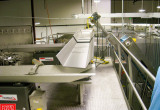 Auction: Frozen Pasta Manufacturing & Packaging 1