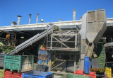 Vegetable Processing and IQF Freezing System 5