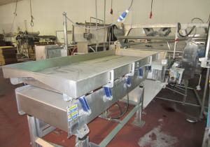 Vegetable Processing and IQF Freezing System