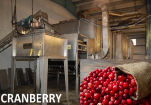 Late Model Cranberry Processing Equipment